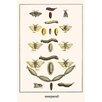 Buyenlarge 'Puss Mouths Silk Work Moths,' by Albertus Seba Graphic Art
