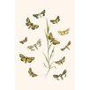 Buyenlarge 'European Butterflies and Moths' by W.F. Kirby Graphic Art