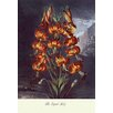 Buyenlarge The Superb Lily Painting Print