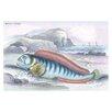 Buyenlarge Wolf Fish by Robert Hamilton Painting Print