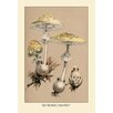 Buyenlarge Deadly Amanita by W. Hamilton Gibson Painting Print