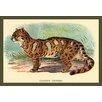 Buyenlarge 'The Clouded Leopard' by Sir William Jardine Painting Print