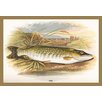 Buyenlarge 'Pike' by A.F. Lydon Painting Print