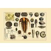 Buyenlarge 'Trilobite and Fossil Sea Life' Graphic Art