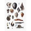 Buyenlarge 'Collected Shell Specimens' by Heinrich V. Schubert Graphic Art