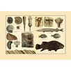 Buyenlarge 'Fossil Ferns and Fish' Graphic Art
