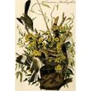 Buyenlarge 'Common Mockingbird' by John James Audubon Painting Print