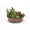 Distinctive Designs Succulent Mix Desk Top Plant in Planter