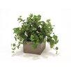 Distinctive Designs Hedera Ivy Desk Top Plant in Planter (Set of 2)