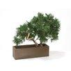 Distinctive Designs Pine Bonsai Tree in Planter