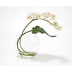 Distinctive Designs White Cymbidium Orchid with Tropical Leaf in Disk Vase