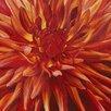 Art Group Fabulous Orange Dahlia by Sarah Caswell Art Print on Canvas