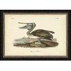 Ashton Wall Décor LLC 'Audubon's Brown Pelican' Framed Painting Print