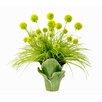 Creative Displays, Inc. Spring Additions Allium Desk Top Plant in Decorative Vase