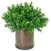 Creative Displays, Inc. Boxwood Shrub in Planter