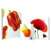 Artistic Bliss 3 Piece Poppy Flowers Photographic Print Set