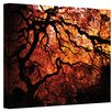 ArtWall Japanese Tree II by John Black Photographic Print on Canvas