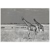 Metal Art Studio 'Giraffe and Zebra' by Mathilde Guillemot Photographic Print
