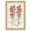 Melissa Van Hise Botanical Studies I Framed Graphic Art