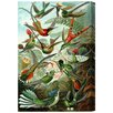 Oliver Gal The Art Cabinet Haeckel - Bird Study Painting Print on Wrapped Canvas