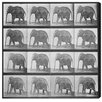 Oliver Gal The Art Cabinet Elephant in Motion Photographic Print on Wrapped Canvas