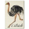 """Oliver Gal """"Ostrich"""" by Olivia's Easel Canvas Art"""