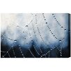 "Oliver Gal Canyon Gallery ""Waterweb"" Photographic Print on Wrapped Canvas"