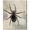 Oliver Gal Spider Silhouette by Oliver Gal Graphic Art on Canvas
