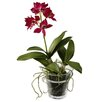 Jane Seymour Botanicals Dendrobium Orchid in Glass Pot