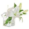 Jane Seymour Botanicals Casablanca Lily in Square Glass Vase