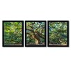 Trademark Fine Art Angel Oak Charleston by Pierre Leclerc 3 Piece Framed Photographic Print Set