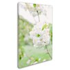 """Trademark Fine Art """"White Cherry Blossoms 4"""" by Ariane Moshayedi Photographic Print on Wrapped Canvas"""