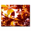 """Trademark Fine Art """"Light Coming Through Tree Leaves"""" by Amy Vangsgard Photographic Print on Wrapped Canvas"""