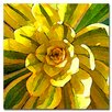 "Trademark Fine Art ""Succulent Square VII"" by Amy Vangsgard Painting Print on Canvas"