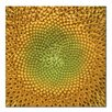 "Trademark Fine Art ""Sunflower"" by Aiana Photographic Print on Canvas"