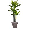 Laura Ashley Home Real Touch Evergreen in Planter
