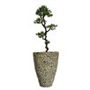 Laura Ashley Home Yacca Tree in Planter