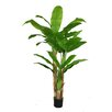 Laura Ashley Home Banana Tree in Pot
