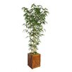 Laura Ashley Home Tall Bamboo Tree in Planter