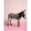 GreenBox Art Donkey on Pink by Catherine Ledner Photographic Print Stretched on Canvas