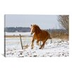 iCanvas 'Brown Pony III' by Carl Rosen Photographic Print on Canvas
