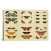 iCanvas 'Butterflies 9 Piece Plate Collection I' by Cramer and Stoll Graphic Art on Canvas