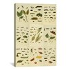 iCanvas 'Butterflies 9 Piece Plate Collection II' by Cramer and Stoll Graphic Art on Canvas