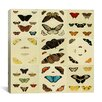 """iCanvas """"Butterflies 9 Piece Plate Collection IV"""" Canvas Wall Art by Cramer and Stoll"""