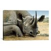 iCanvas 'Black Rhino' by Harro Maass Graphic Art on Canvas