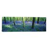 iCanvas Panoramic Bluebells in a Forest, Charfield, Gloucestershire, England Photographic Print on Canvas