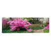 iCanvas Panoramic Azaleas in The Garden of Eden at The Ladew Topiary Gardens, Monkton, Maryland Photographic Print on Canvas