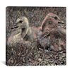 iCanvas Baby Canadian Geese #2 Graphic Art on Canvas