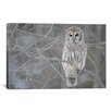 iCanvas Barred Owl on Branches Photographic Print on Canvas
