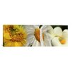 iCanvas Panoramic Yellow and White Flowers Photographic Print on Canvas